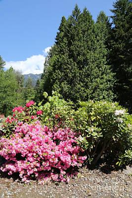 Photograph - Washington Mountain Rhododendrons by Carol Groenen