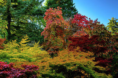 Photograph - Washington Park Arboretum's October Fall Colors by Michael McAuliffe