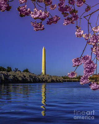 Photograph - Washington Reflection And Blossoms by Nick Zelinsky