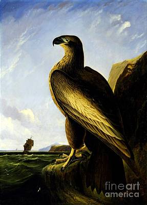 American Eagle Painting - Washington Sea Eagle  by Pg Reproductions