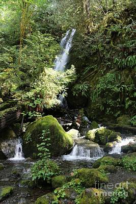 Photograph - Washington Waterfall by Carol Groenen