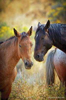 Photograph - Washoe Lake Mustangs by LeeAnn McLaneGoetz McLaneGoetzStudioLLCcom