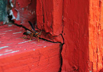 Photograph - Wasp And Red by David Arment
