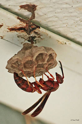 Photograph - Wasp At Work by Terri Mills