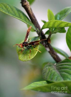 Photograph - Wasp by Balanced Art