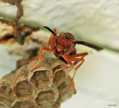 Photograph - Wasp Cameo by Terri Mills