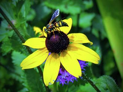 Photograph - Wasp Feeding by Cynthia Guinn