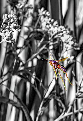 Wasp Flight Sc Art Print by Steve Harrington