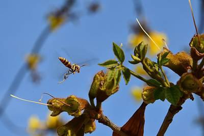 Apocrita Photograph - Wasp In Flight 2  by Linda Brody