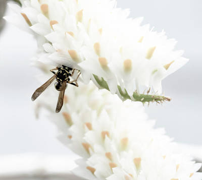 Photograph - Wasp In The Flowers by Tracy Winter