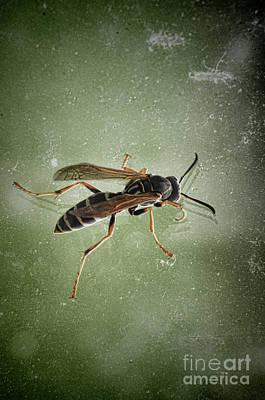 Photograph - Wasp by Jill Battaglia