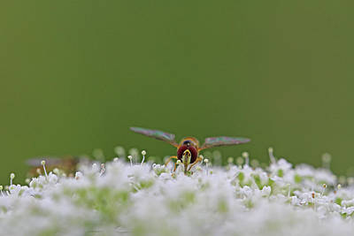 Photograph - Wasp Meadow Life by Juergen Roth