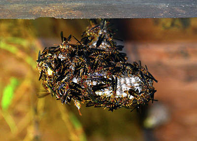 Photograph - Wasp Nest by David Lee Thompson