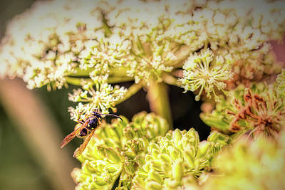 Photograph - Wasp On Flower. by Leif Sohlman