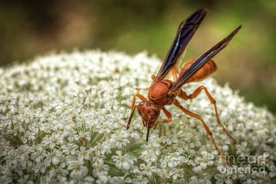 Photograph - Wasp On Flowers by David Cutts