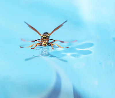 Photograph - Wasp On Water 2018-1 by Thomas Young