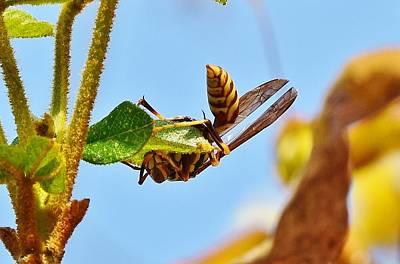 Apocrita Photograph - Wasp Upside Down 6 by Linda Brody