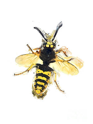 Wasp.insect Digital Art - Wasp Watercolor Art by Justyna JBJart