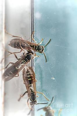 Photograph - Wasps by Jill Battaglia