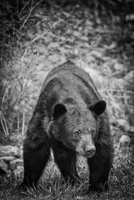 Photograph - Watch Out-bw by Joye Ardyn Durham