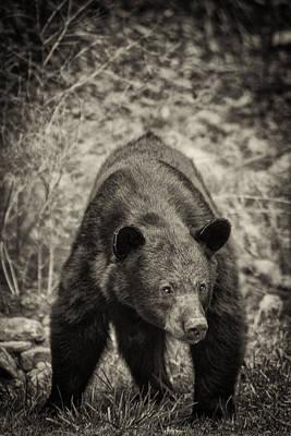 Photograph - Watch Out-sepia by Joye Ardyn Durham