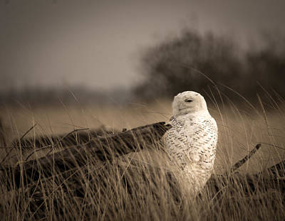 Photograph - Watch Owl by Erin Kohlenberg