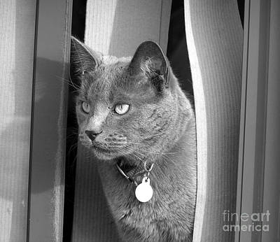 Photograph - Watchdog Kitty by Susan  Dimitrakopoulos