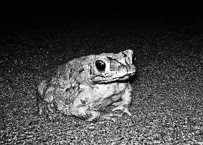 Photograph - Watcher Of The Night by Nathan Little