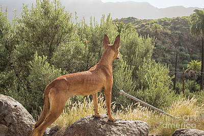 Photograph - Watchful Dog by Patricia Hofmeester