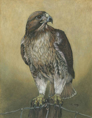 Red Tail Hawk Mixed Media - Watchful Eye  by Carol Gray