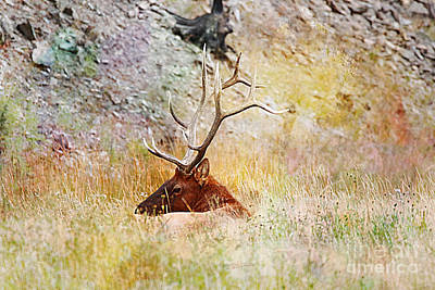 Yellowstone Digital Art - Watchful Eye by Robert Pearson