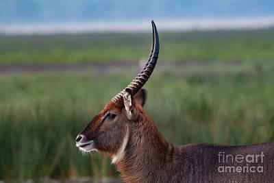 Kenya Photograph - Watchful Eye by Nichola Denny
