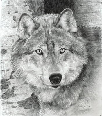 Drawing - Watchful Eyes by Carla Kurt