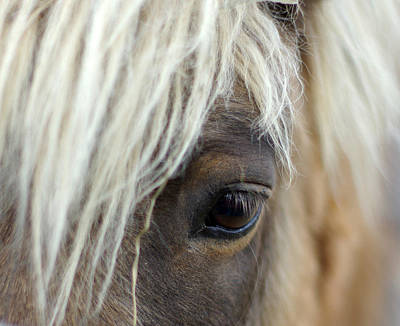 Shetland Ponies Photograph - Watchful One by Linda Mishler