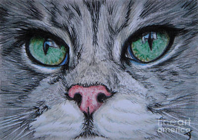 Drawing - Watching Aceo by Yvonne Johnstone