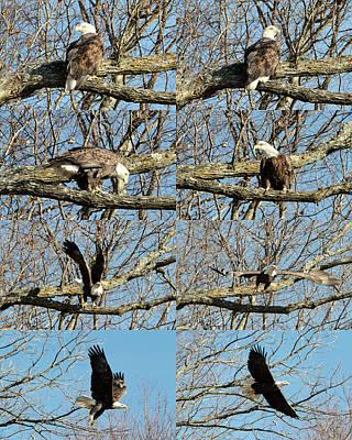 Photograph - Watching An Eagle by John Freidenberg