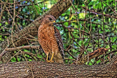 Photograph - Watching And Waiting by HH Photography of Florida