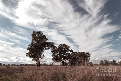 Photograph - Watching Clouds Float Across The Sky by Linda Lees