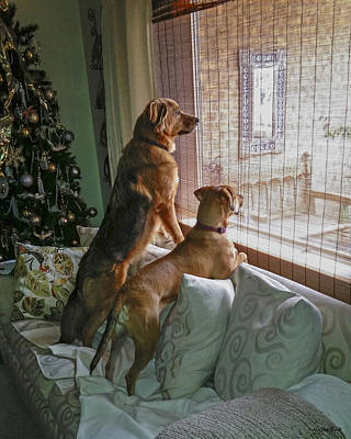 Photograph - Watching Dad Pack The Car by Allen Sheffield