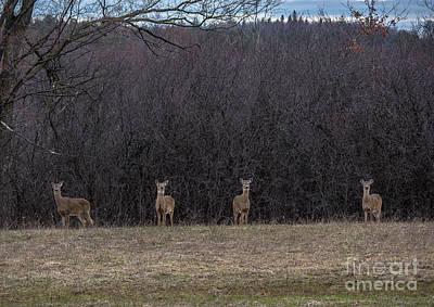 Photograph - Watching Deer by Cheryl Baxter