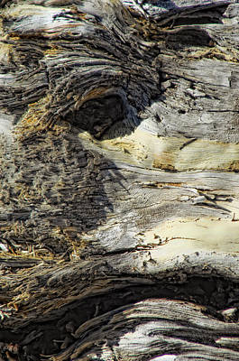 Photograph - Watching by Donna Blackhall