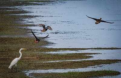 Photograph - Watching Ducks Fly By by Ray Congrove