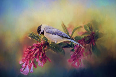 Chickadee Photograph - Watching Flowers Bloom Bird Art by Jai Johnson