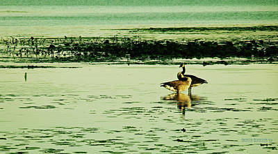 Canadian Goose Wall Art - Photograph - Watching Over His Mate by Garth Glazier