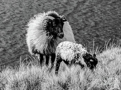Photograph - Watching Over by Lexa Harpell