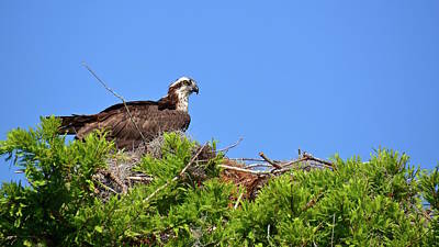 Photograph - Watching Over The Nest by Carol Bradley
