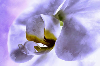 White Orchid Photograph - Watching Over You by Krissy Katsimbras