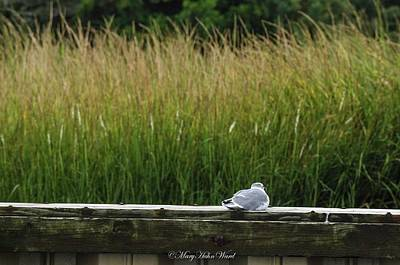 Photograph - Watching The Grass Grow by Mary Hahn Ward