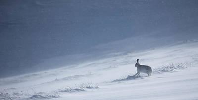 Photograph - Watching The Spindrift Snow by Peter Walkden