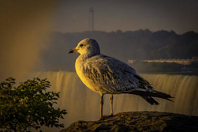 Photograph - Watching The Sunrise by Francisco Gomez